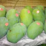Mangga Arumanis Kualitas Export