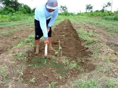 sewa tanah