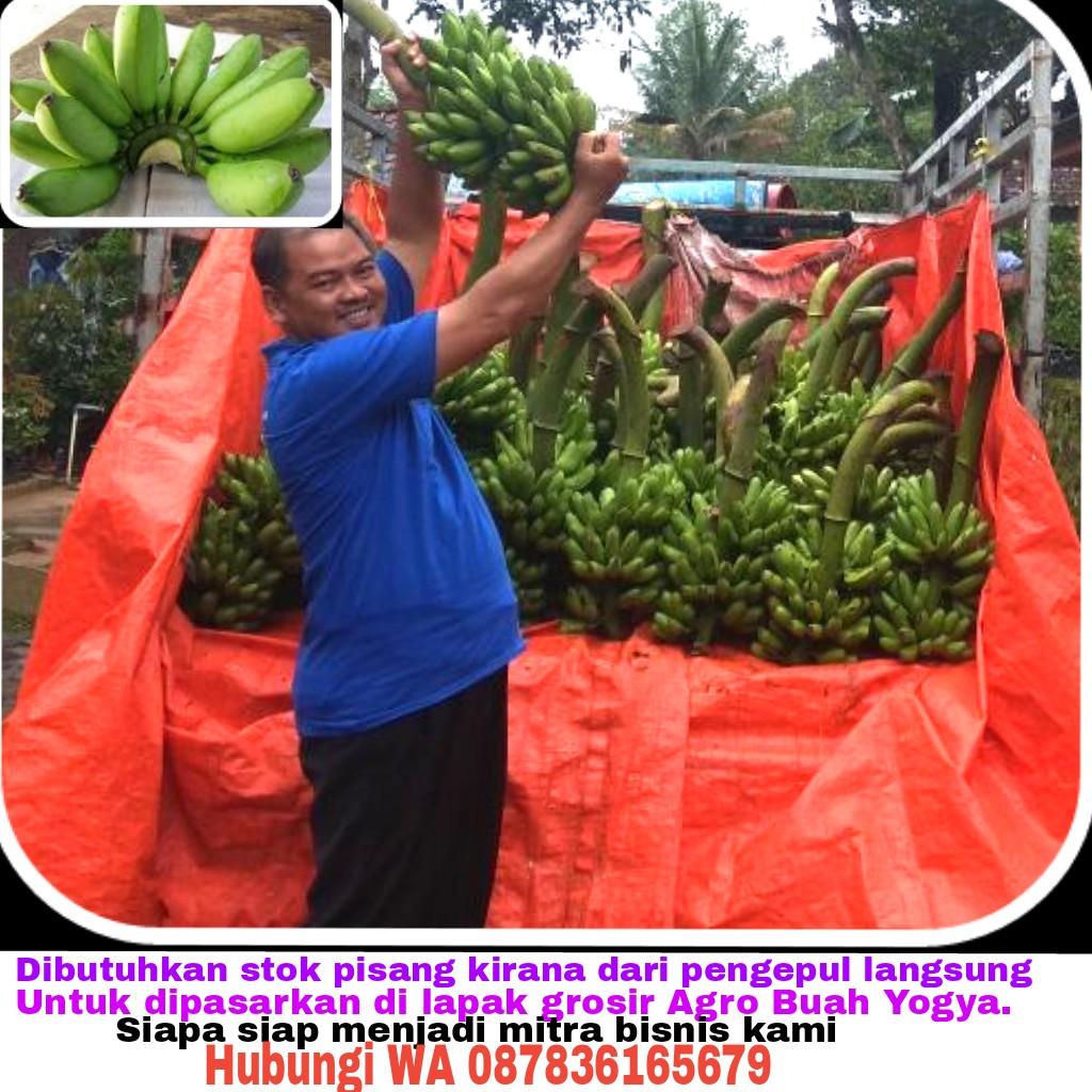 pisang mas kirana