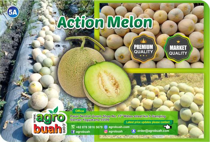 melon supplier