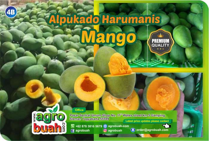 mango supplier