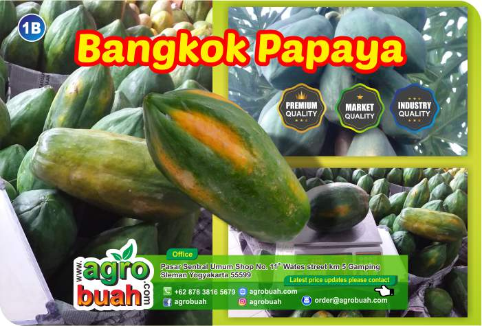 supplier papaya