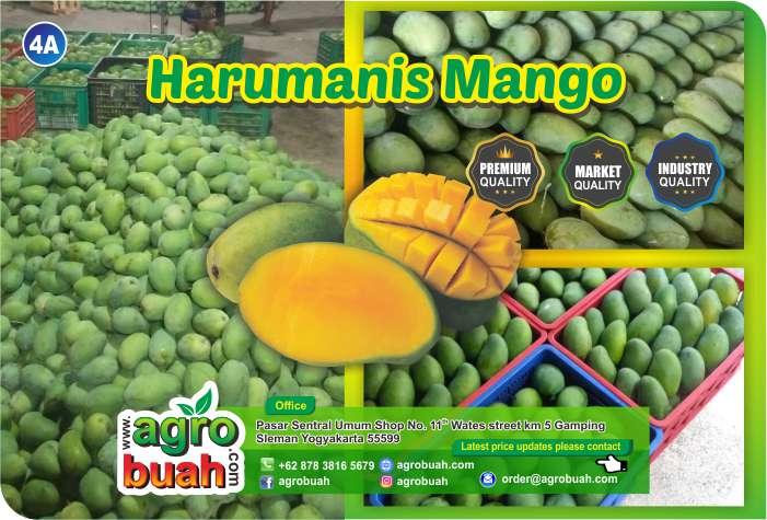 mango supplier