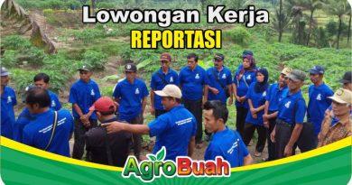 lowongan kerja reporter