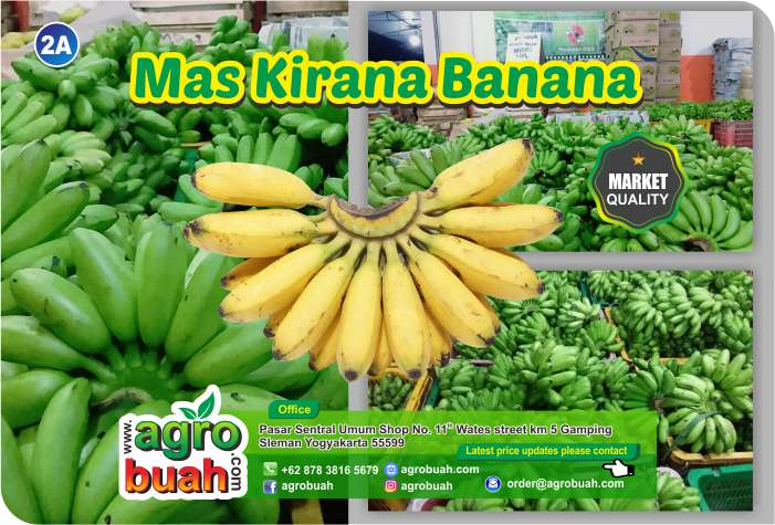 Banana supplier