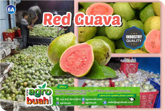 guava supplier