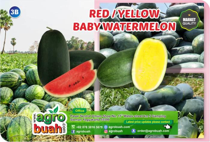 watermelon supplier