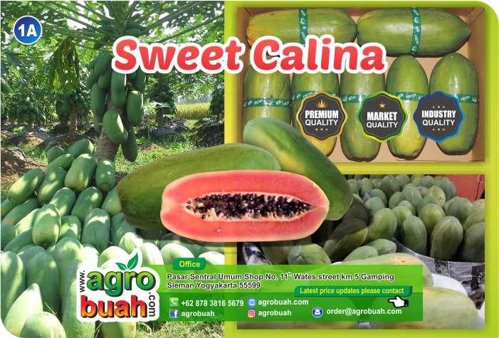 papaya supplier