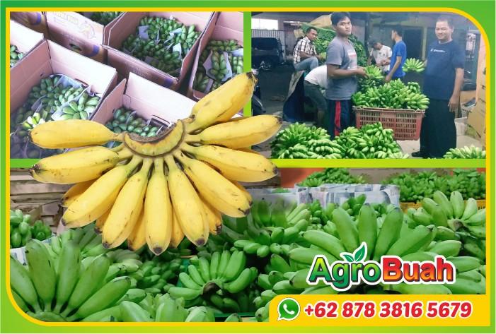 jual pisang