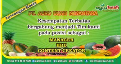 lowongan kerja manager, lowongan kerja hrd, lowongan kerja content creator
