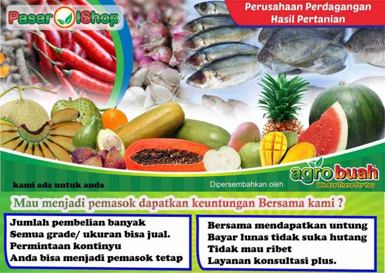grosir jual beli buah