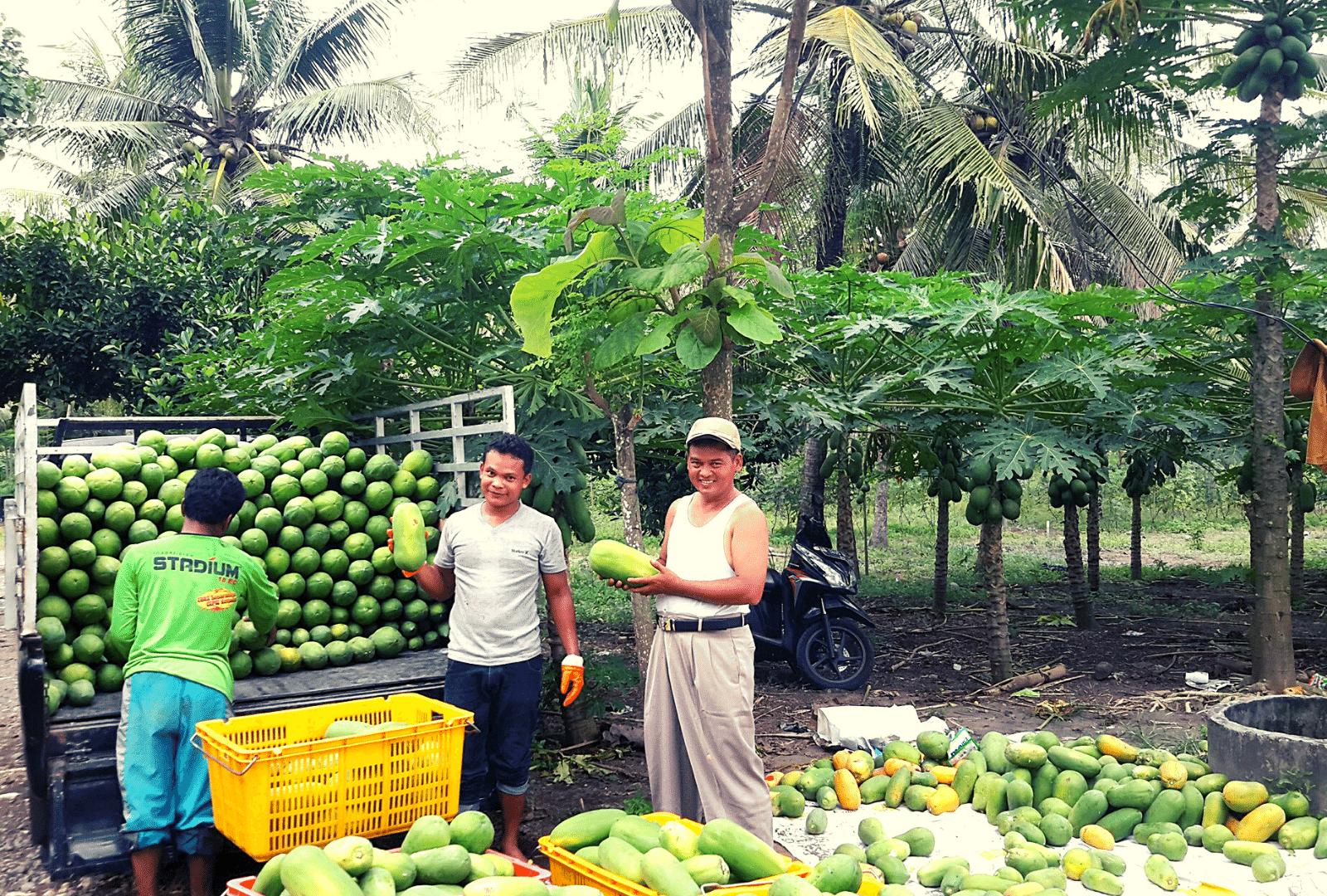 Agro Buah