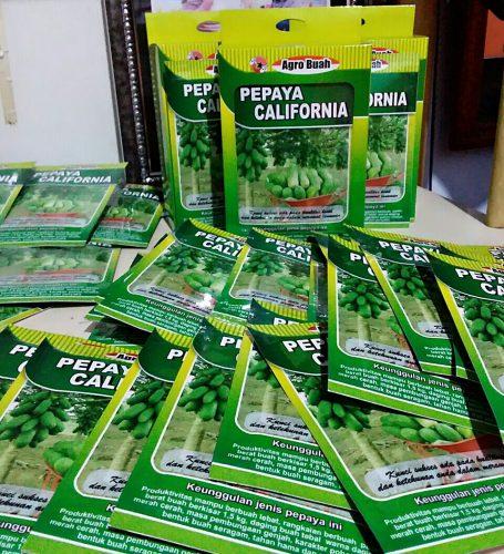 Jual Benih Pepaya California atau calina