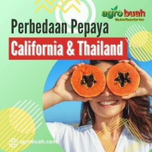 Perbedaan Pepaya California dan Bangkok